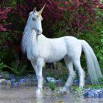 Licorne - Animal Totem